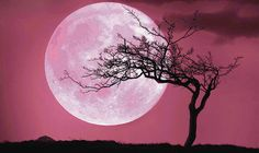 Pink Moon: April 2017 full moon rises tonight – but will it turn pink? - https://newsexplored.co.uk/pink-moon-april-2017-full-moon-rises-tonight-but-will-it-turn-pink/