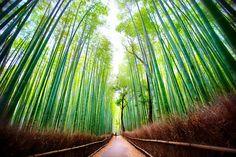 Arashiyama Bamboo Path in Kyoto - Japan