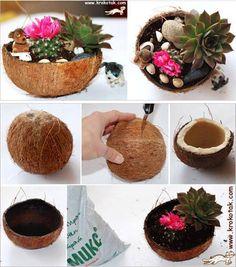 Garden Planters, Succulents Garden, Garden Art, Planter Pots, July Crafts, Home Crafts, Deco Cactus, Coconut Shell Crafts, Coconut Flower
