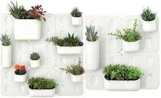 plantas en interior de casa - Buscar con Google