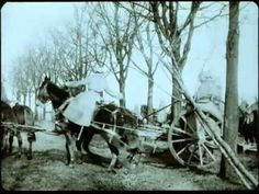 Messter Woche Nr. 15 (1915)