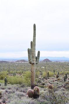 Phoenix: The ultimate winter getaway via Lauren Kelp
