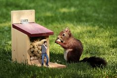 If you can get my things so I do 48  when you try to get it back and you get caught :) #pic #image #animal #squrrel #finart #art #work #photo #manipulation #color #colors #green #thief