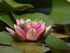 """""""One little frog balancing On a lily pad of green. He thought it was, so much fun, He called for another frog to come..."""""""