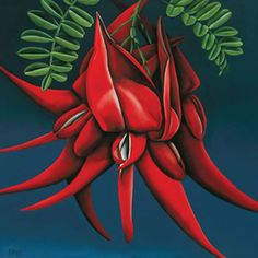 Kakabeak (Kowhai Ngutukaka) is found only in New Zealand. Diana Adams