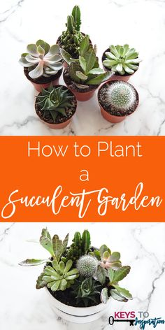 I have been seeing cute little succulent gardens all over Pinterest recently. I love the tiny details in each unique plant and there's just something about them that is really cute. I had to have my own garden in my house. I've seen a few pre-made gardens at the store, but none that had the right …