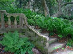 Ferns line this stone staircase