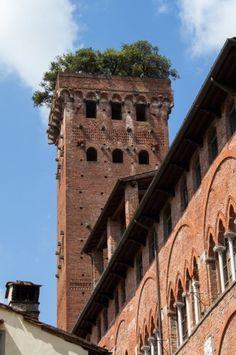 Lucca: Guinigi torony Belépődíj: 3,5 euró.