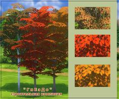 Sims 4 CC's - The Best: Autumn time vegetation by Mulena