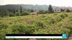 Grasse, la ville aux mille parfums .Les hébergements #fleursdesoleil vous attendent. http://www.fleursdesoleil.fr/maisons-hotes-provence-alpes-cote-azur.html