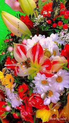 Good Morning Beautiful Flowers, Beautiful Flowers Pictures, Beautiful Flowers Wallpapers, Beautiful Flowers Garden, Exotic Flowers, Flower Pictures, Amazing Flowers, Beautiful Roses, Pretty Flowers