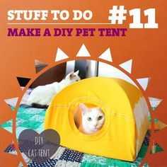 Try making your own DIY pet tent! You just need a couple of clothes hangers, a t-shirt and a piece of cardboard.  http://www.instructables.com/id/DIY-cat-tent/