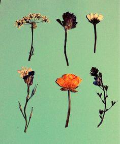 Pressed Flowers.