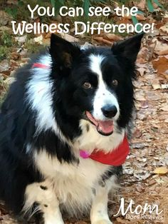 This post is sponsored by Wellness and the BlogPawsTM Pet Influencer Network™. I am being compensated to help share the availability of Wellness Products at PetSmart, but we only share information we feel is relevant to our readers. Neither Wellness nor...
