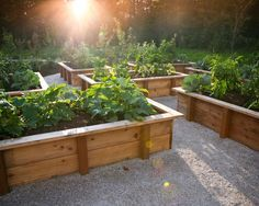 Great Backyard Raised Gardens Design
