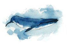 Blue Whale by Duffzilla
