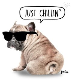 The key to a PAWesome day? Lots of chillin'!