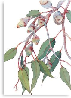 Eucalyptus watercolour print - botanical wall art print of Australian native gum tree branch - vertical print - nature picture Australian Native Flowers, Australian Plants, Australian Art, Australian Wildflowers, Australian Gifts, Watercolor Walls, Watercolor Leaves, Watercolour Art, Botanical Wall Art