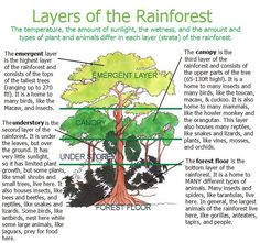 Layers of the Rainforest Printable from http://learncreatelove.com ...