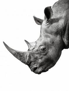 Chris Crisman Photography - New-Work - 32 Animal Kingdom, Animals And Pets, Cute Animals, Wild Animals, Baby Animals, Animal Original, Rhino Tattoo, Rhino Art, Rhino Animal