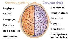 Cerveau gauche et cerveau droit.