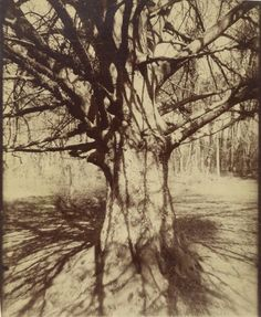 © EUGENE ATGET - Arbre, 1910-1915 - Getty Open Content Images
