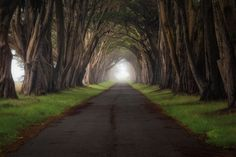Point Reyes, California. | 14 Magnificent Tree Tunnels: Bishop pine, Douglas fir and coast redwood are all to be found in this atmospheric part of the Pacific coast. Via: i.imgur.com