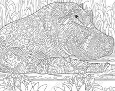 Adult Coloring Pages. Hippo. Hippopotamus. Zentangle Doodle Coloring Book Page for Adults. Digital illustration. Instant Download Print.