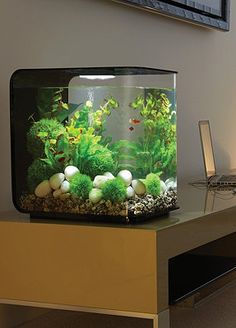 Designed to house small fish or shrimp.