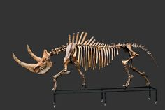 rhino skeleton - Google Search