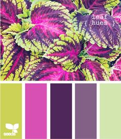 this has the green from the kitchen in it and the purples are SO pretty. With tan walls and neutral colored furniture, these purples would make a room POP! @Stephanie McPherson