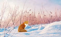Cabin Wall Art Wildlife Art Print Red Fox in by FineArtography