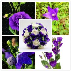 Fresh 300pcs/pack purple Lisianthus seeds Rare Eustoma seeds Beautiful Flower potted Bonsai Seeds for Home & Garden decoration #Affiliate