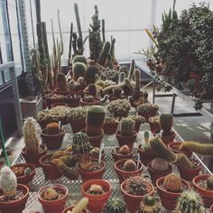 I'm going to be spending a lot of time communing with these cacti