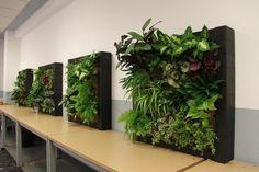 Cuadros Vivos. Imágenes del curso de jardines verticales en Madrid. Noviembre de 2012 - Paperblog