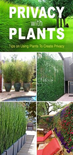 Privacy with Plants! Tips and ideas on how to use plants to create privacy in your garden or yard! Privacy with Plants! Tips and ideas on how to use plants to create privacy in your garden or yard! Privacy Landscaping, Garden Landscaping, Landscaping Ideas, Garden Privacy, Privacy Screens, Privacy Shrubs, Bamboo Privacy Fence, Garden Shrubs, Balcony Privacy Plants