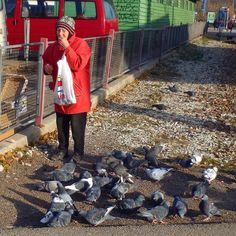 Saw this woman eating and feeding pigeons outside the Russian Market in Tallinn Estonia. Couldn't help snapping a photo of her she seemed so content! (Oct 2014)  #travel #pigeons #russia #estonia #tallinn #baltics #budgettravel #diabetes #t1d #T1Dtravel #europe #igtravel #traveler #traveling #travelgram #instatravel #wanderlust #worldtravel #vacation #holiday #animals #birds #diabetic #type1diabetes #typeonediabetes #nature by 70_130