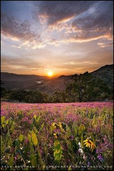 Greensprings Spring Sunset, by Sean Bagshaw by joann