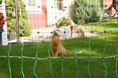 Katzenschutzzaun grün, Komplettset