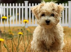 DIY Fence Ideas for Dogs. Request a free quote!
