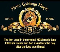 Did you know.the lion used in the original MGM movie logo killed its trainer and two assistants the day after the logo was filmed The More You Know, Good To Know, Did You Know, Useless Knowledge, Wtf Fun Facts, Random Facts, Random Trivia, Random Stuff, Funny Stuff
