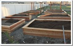 Backyard gardening boxes.
