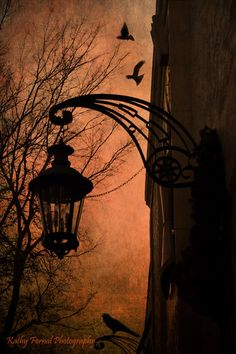 Surreal Ravens Photography, Gothic Street Lamps Ravens Crows, Gothic Eerie Halloween Street Lanterns, Surreal Ravens Haunting Spooky Photos by KathyFornal on Etsy https://www.etsy.com/listing/162325648/surreal-ravens-photography-gothic-street