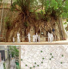 URBAN CANOPY PARK  En 2004, travail de repérage et de scénographie des formations végétales remarquables à Hong-Kong - Cabinet d'archi Coloco