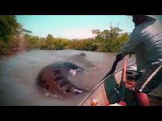 Megalodon Shark Caught on Tape, Real Mermaids, Top 5 Giant Snakes, Mesothelioma - Info, New Tech - YouTube