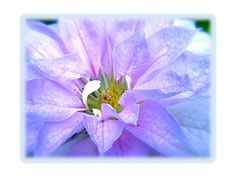 Lavender Loves Green by AntlerPantry on Etsy