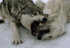 Wolf Fang Fist!