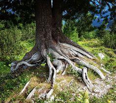 WIE EIN BAUM SEIN  Jeder Mensch beginnt als kleiner Spross.  Jeder wurzelt.  Jeder wächst.  Jeder wird größer.  Jeder wird zurechtgestutzt.  Jeder wird stärker.  Jeder muss Unwetter aushalten.  Jeder setzt Jahresringe an.  Jeder muss wieder zu Erde werden.  So bin ich wie ein Baum. Wie ein Baum habe ich Wurzeln.  Wo komme ich her?  Wo gründen sich meine Wurzeln?  Sind meine Wurzeln gesund?  Welche Menschen fallen mir ein,  wenn ich an meine Wurzeln denke?  Wo bin ich verwurzelt?  #baum… Kraut, Instagram, Plants, Roots, Earth, Healthy, People, Plant, Planets