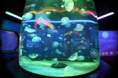 dream fish tank