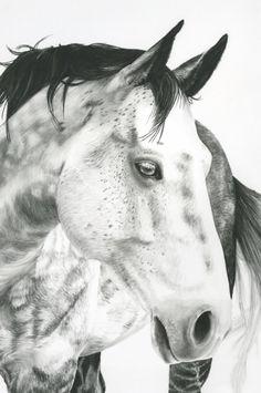 Caballo dibujo en carboncillo Fred 30 X 40